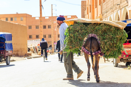 Errachidia, Morocco - February 27, 2016: A man leads a donkey laden with greenery to a marketplace through a Moroccan street past modern vehicles and ancient buildings