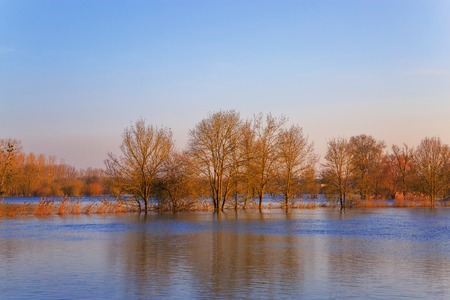 countryside landscape representing flooded trees under rising waters