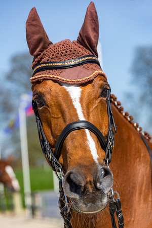 Closeup on Head of a dressage horse wearing an anti-fly cap Stock Photo