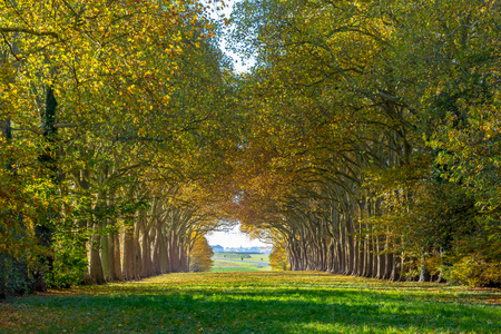 panoramic view of an alley lined with ancient trees Stock Photo