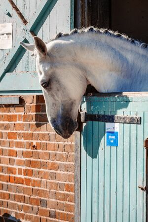 Jardy, France - April 4, 2016:Closeup on Grey horse out head here in his box in the stables Sajtókép