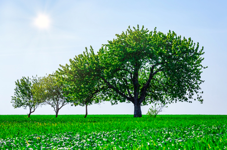 Beautifull trees in a field. Generation growth legacy family concept 스톡 콘텐츠
