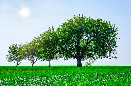 Beaux arbres dans un champ. Concept de famille héritage de croissance de génération