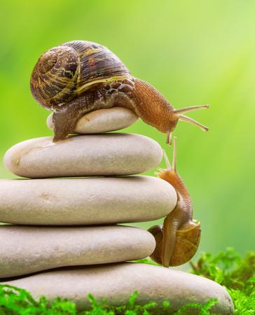 Un escargot au sommet d'un tas de cailloux encourage son partenaire. Motivation, coaching, travail d'équipe, partenaire, concept d'assistance