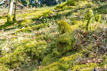 Mossy tree trunks located near narrow countryside road and forest in peaceful nature