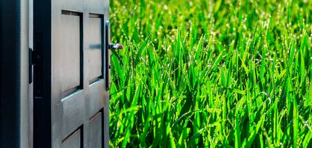 Opened door concept with green and damp wheat field in the background