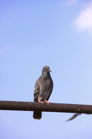 side viewing: a pigeon hold on a post
