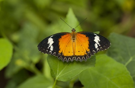 Butterfly Stock Photo - 7576965