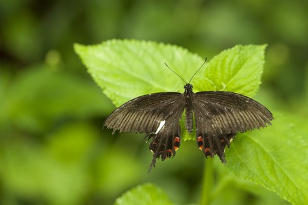 Butterfly Stock Photo - 7577000
