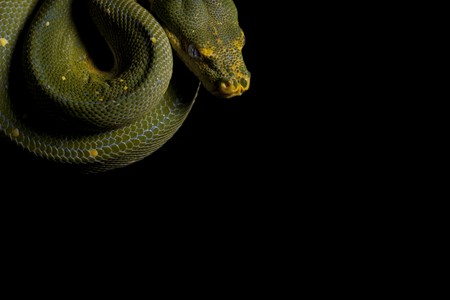 Python snake Stock Photo