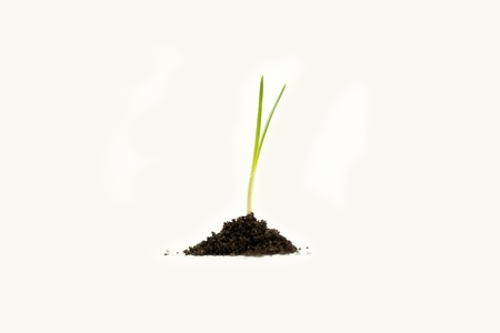 Young plant in soil on white background