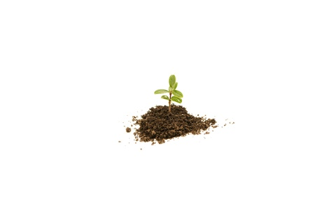 Young plant in soil on white background Stock Photo - 9954970