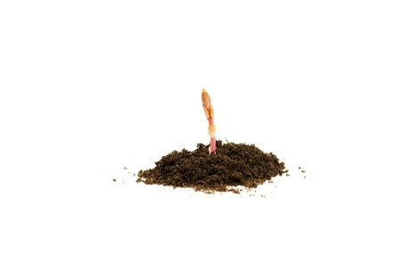Young plant in soil on white background Stock Photo - 9954974