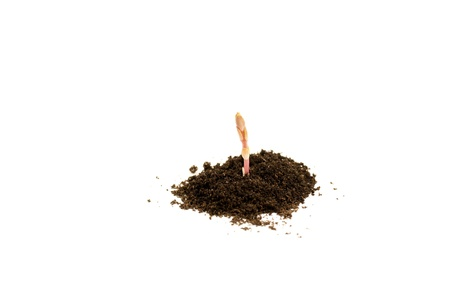 Young plant in soil on white background Stock Photo - 9954975