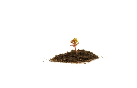 Young plant in soil on white background Stock Photo - 9954969