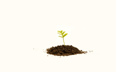 Young plant in soil on white background Stock Photo - 9954971