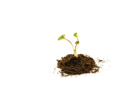 Young plant in soil on white background Stock Photo - 9954977