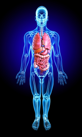 3d rindió la médica de rayos X ilustración - la anatomía pulmones