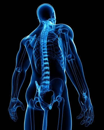 skeletal muscle: 3d rendered medical x-ray illustration of Spinal cord X-ray anatomy Stock Photo