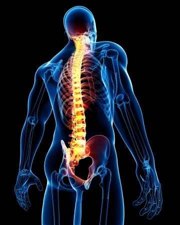colonna vertebrale: 3d ha reso medico raggi x, illustrazione, di anatomia della colonna vertebrale Maschio