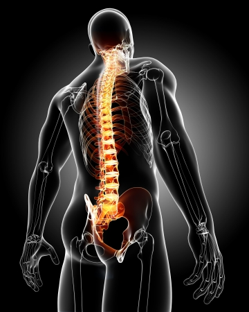 3d rendered medical x-ray illustration - male back anatomy illustration