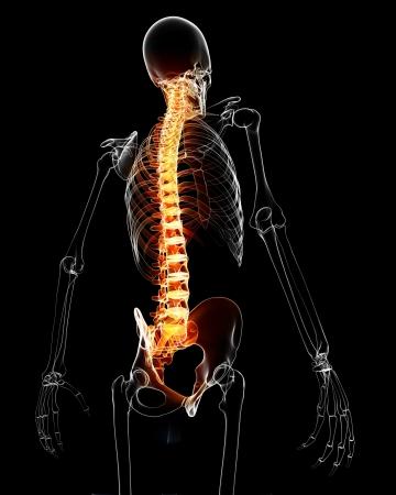 medula espinal: 3d rindi� la m�dica de rayos X ilustraci�n de la m�dula espinal con la anatom�a del dolor Foto de archivo