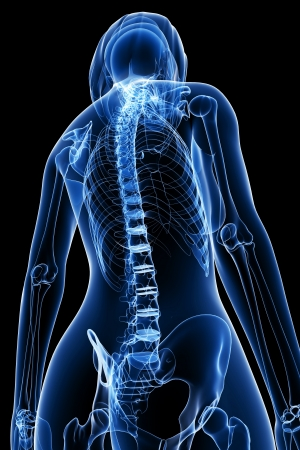 human bones: 3d rendered medical x-ray illustration of Female Spinal cord X-ray anatomy
