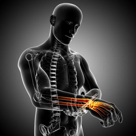 Hand pain anatomy Stock Photo - 13757590