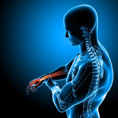 douleur main: L'anatomie douleur � la main en bleu Banque d'images