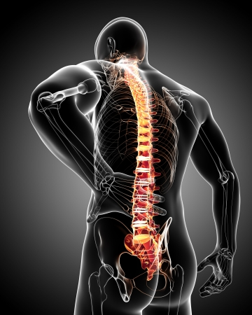 male massage: back pain anatomy