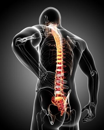 pijn in de rug anatomie Stockfoto