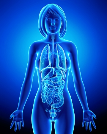 All organs of female body in blue x-ray loop photo