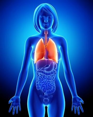 aparato respiratorio: Mujer sistema respiratorio con los pulmones