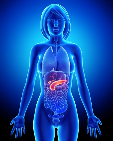 pancreas: full part Female biliary anatomy in blue x-ray Stock Photo