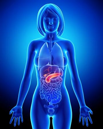 pankreas: voll und ganz weiblich bili�re Anatomie in blau x-ray Lizenzfreie Bilder