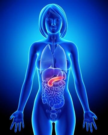 trzustka: Kobieta żółciowych anatomia na niebiesko x-ray