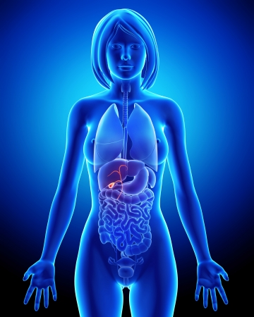 Part of Female biliary anatomy in blue x-ray Stock Photo - 14603588