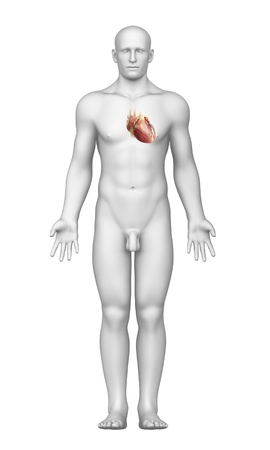 conduction: heart interior view with male body Stock Photo