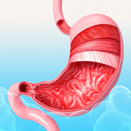 tummy: Anatomy of human stomach in blue background Stock Photo