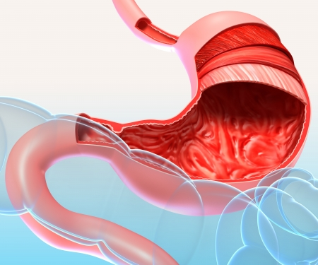 Anatomy of human stomach in section with blue background photo