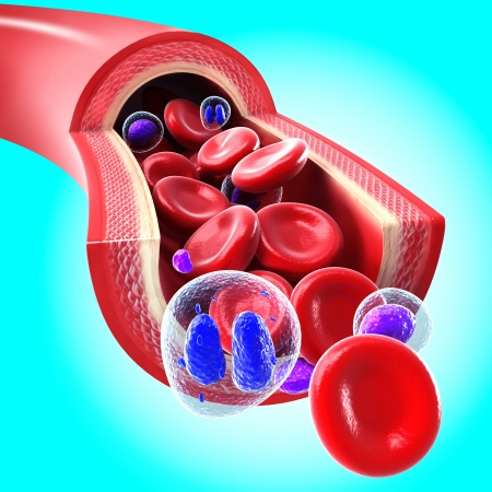 Red blood cells flowing through a vein and artery in blue