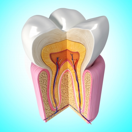 3D Illustration of up side view of teeth anatomy in blue illustration