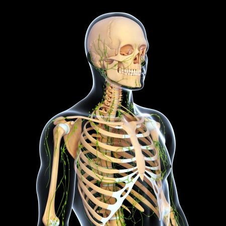 3d art illustration of  lymphatic system of male Stock Illustration - 14772029