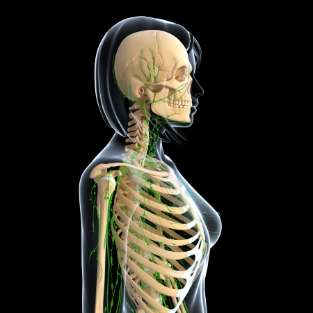 3d art illustration of  lymphatic system of female side view isolated in black background illustration