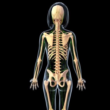 scheletro umano: Illustrazione arte 3d del sistema linfatico della femmina vista retro in sfondo nero Archivio Fotografico