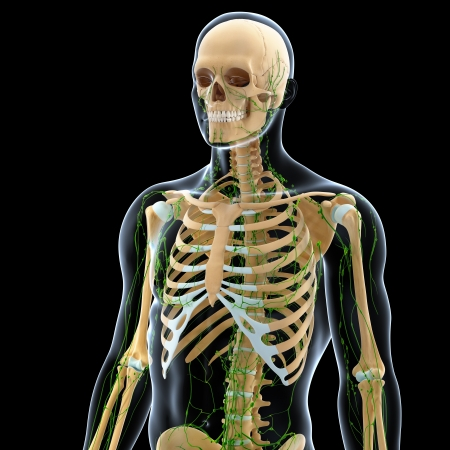 3d art illustration of  lymphatic system of male in black illustration