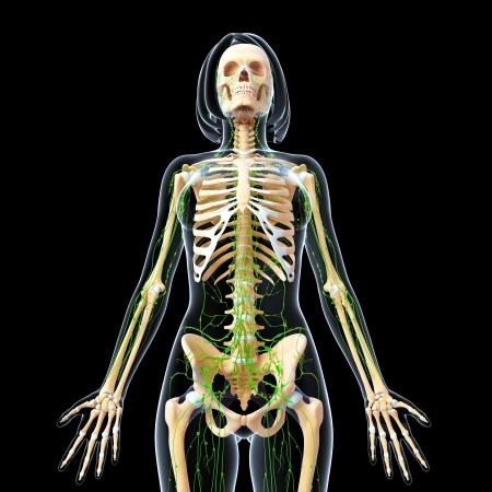 3d art illustration of  lymphatic system of female full body in black background illustration