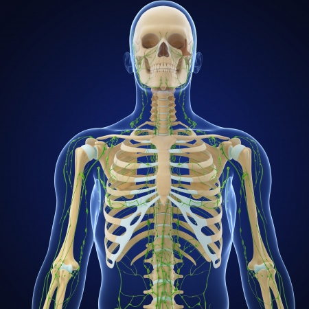 3d art illustration of lymphatic system of male in blue background