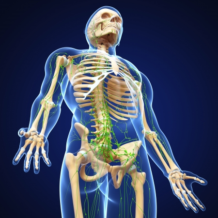 3d art illustration of  lymphatic system of male side view in blue background Stock Illustration - 14772088