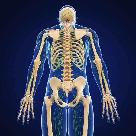 3d art illustration of  lymphatic system of male with back in blue background illustration